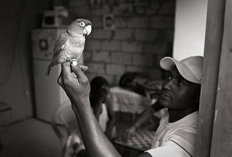Man with bird. Guayaquil, Ecuador. 2011.