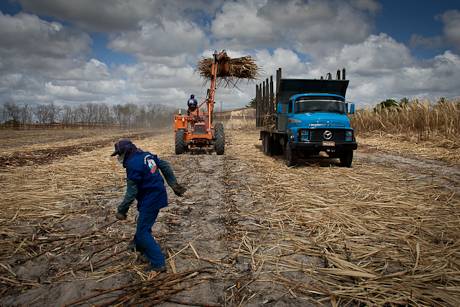 Workers working sugar cane. Patacas, Aquiraz - CE, Brazil. 2008.