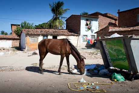 Wandering horse. Fortaleza, CE, Brazil. 2008.