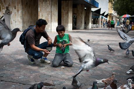 More birds. Guayaquil, Ecuador. 2011.