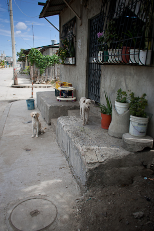 Dogs on the doorstep. Guayaquil, Ecuador. 2011.